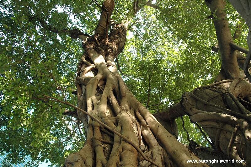 """寻访""""香港最贵的一棵树"""" - 2010.5.24"""